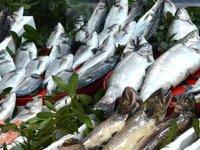 Balıkçılar, sezonu yüzde 80 verimlilikle kapattı
