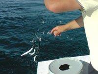 Amatör balıkçılara 'boy limiti' uyarı geldi