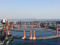 Mersin Barosu, 'Balık Çiftlikleri Projesi'ne tepki gösterdi