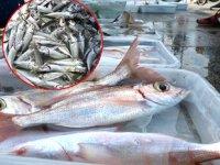 Av yasağında olta balıkçılarının yüzü güldü
