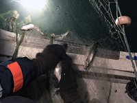 Van Gölü'nde kaçak avlanan 250 kilo inci kefali ele geçirildi