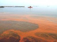 Tekirdağ'da denizin turuncu olmasının sebebi belli oldu