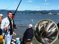 Fatsalı amatör balıkçılar, en çok istavrit avlıyor