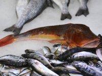Sinop'ta tezgahları kırlangıç balığı süslüyor