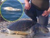 Edirne'de ölü deniz kaplumbağası kıyıya vurdu