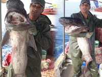 Antalyalı balıkçı, 1 metre uzunluğunda akya balığı yakaladı