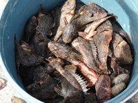 İskorpit balığı tezgahlardaki yerini aldı