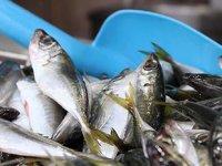 Ramazan ayında balık tercih edilmiyor