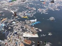 Tarım ve Orman Bakanlığı'ndan balık ölümleriyle ilgili açıklama geldi