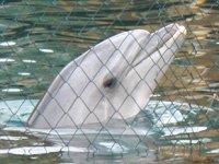 Kanada, yunus ve balina esaretini yasakladı