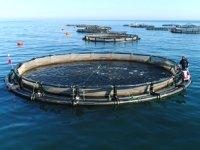 Trabzon'da yetiştirilen balıkların yüzde 90'ı ihraç ediliyor