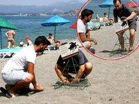 Carettalar kıyılara yumurta bırakmaya başladı