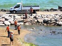 Sinop sahillerinde yosun temizliği yapıldı