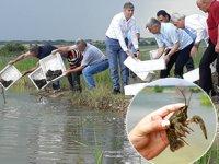 Çakmak Köyü Barajı'na 2 bin adet kerevit bırakıldı