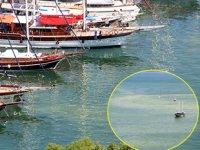 Fethiye'de denizin renginin neden değiştiği ortaya çıktı