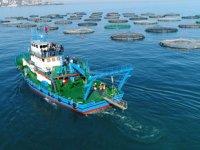 Kafes balığı üretiminden 30 milyon dolarlık gelir bekleniyor