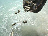 Göl ve göletlere 5,1 milyon sazan balığı yavrusu bırakılacak