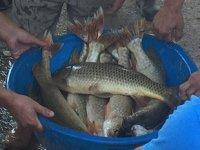 Bursa'da bu gölden çıkan balıklar, 100 yıldır müzayede ile satılıyor