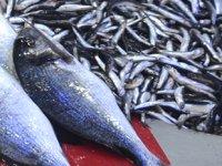 Sinop'ta balıkçılık sektörüne '10,5 milyon euro'luk yatırım yapılacak