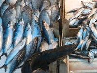 Balık tezgahlarında çeşit azaldı, fiyatlar arttı
