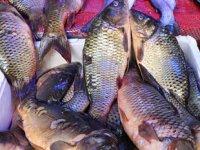 Balıkçı tezgahlarında sazan bolluğu yaşanıyor