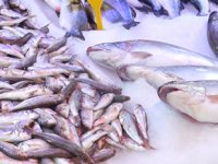 Karadeniz'de balıkçılar sezonu iple çekiyor