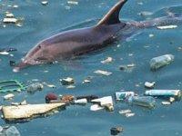 Marmara Denizi'nde yunustan fazla çöp var