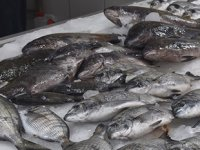 Eşkina balığı tezgahlardaki yerini almaya başladı