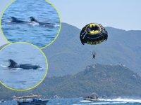 Deniz paraşütü yapan turistlere yunuslar eşlik etti