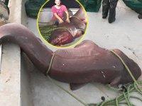 Çanakkaleli balıkçılar 5 metrelik köpek balığı yakaladı