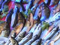 Samsunlu balıkçılar yeni sezondan umutlu olduklarını açıkladılar