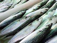 Rus uzmanlar, Türk deniz mahsulü üreticilerini denetleyecek