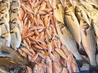 Türkiye'nin balık ihracatı 1 milyar dolara ulaştı