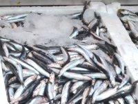 Deniz suyu sıcaklığı balık fiyatlarını yükseltti