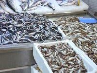 Balıkçılar, Karadeniz'de balık bulamıyor