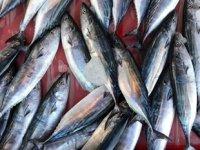 Balıkçıların palamut hasreti devam ediyor
