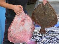 Balıkçıların yüzü kalkan balıklarıyla güldü
