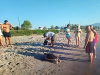 Kuşadası'nda 3 adet deniz kaplumbağası ölü olarak bulundu