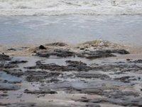Brezilya'daki petrol sızıntısı 150 plajı kirletti