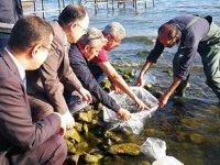İznik Gölü'ne 6 bin adet yayın balığı bırakıldı