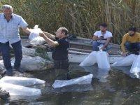 Gölhisar Gölü'ne 2 bin yayın balığı bırakıldı