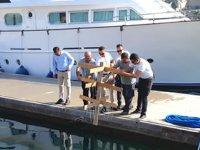 Mercan yuvaları, Çeşme Marina içine yerleştirildi