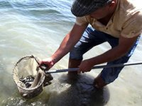 Barajlara 1 milyon 420 bin yavru balık bırakıldı