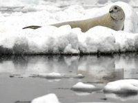 Buzulların erimesi ölümcül virüsün yayılmasını tetikliyor