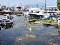 Köyceğiz Gölü ve Dalaman kanallarında kirlilik had safhaya ulaştı