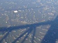 Nifrit Deresi'nde kirlilik nedeniyle balıklar oksijensiz kaldı