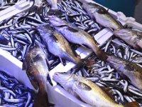 Eşkina balığı, yeniden tezgâhlarda yerini aldı