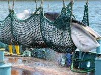Japonya, 'sürdürülebilir avcılık' yasasına onay verdi