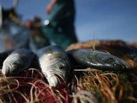 Batı Karadeniz'de palamut sezonu kapandı