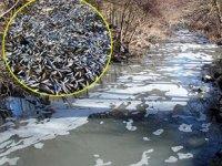 Balık ölümlerine neden olan firmaya 361 bin TL ceza kesildi